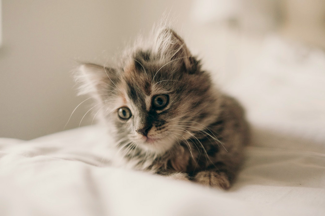 A kitten on a bed