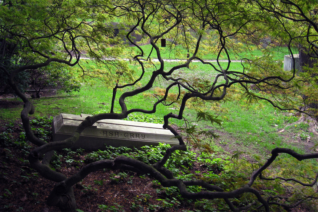Grave site of American botanist Asa Gray (1810-1888), in Mount Auburn Cemetery, Cambridge, Massachusetts