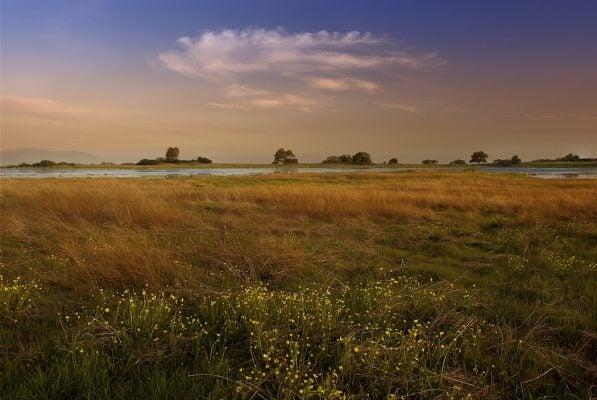 Santa Rosa vernal pool