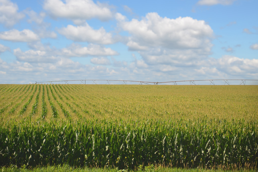 A corn field in Nebraska