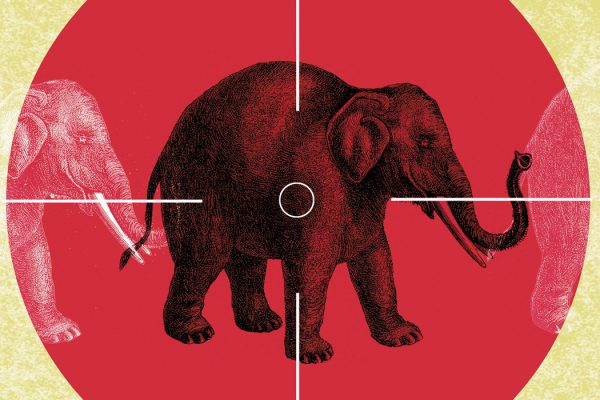 An illustration of an elephant between crosshairs