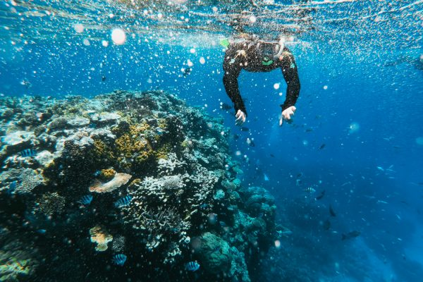 A person swimming near a coral reef