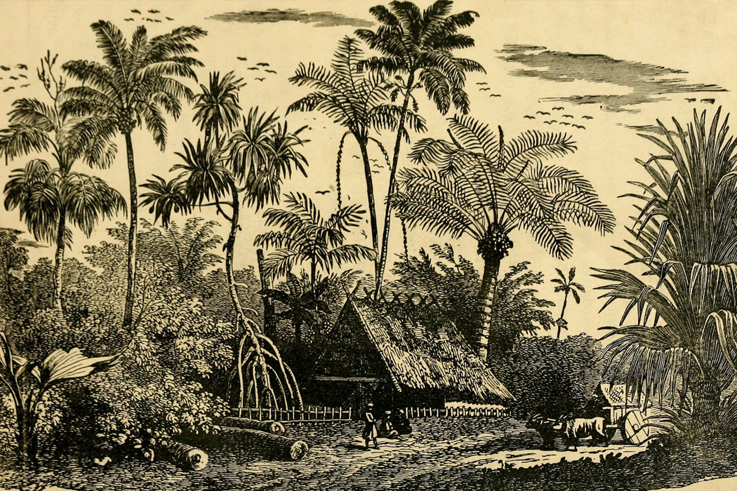 Scene in The Bahamas, 1884