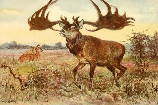 The Irish Elk