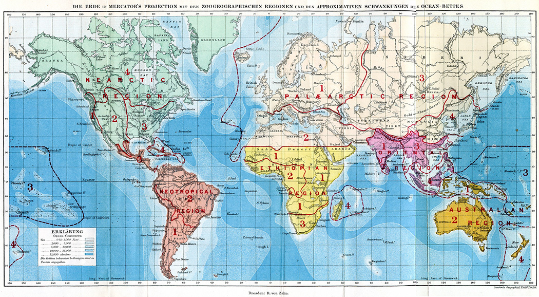 World map showing the zoogeographical regions by Alfred Russel Wallace