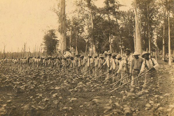 Parchman Penal Farm. Male prisoners hoeing in a field, 1911