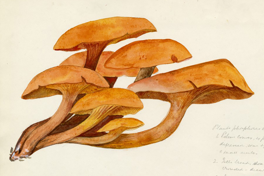 P.S., Mushrooms Are Extremely Beautiful | JSTOR Daily