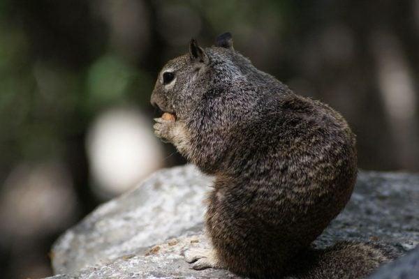 Squirrel Hoarding