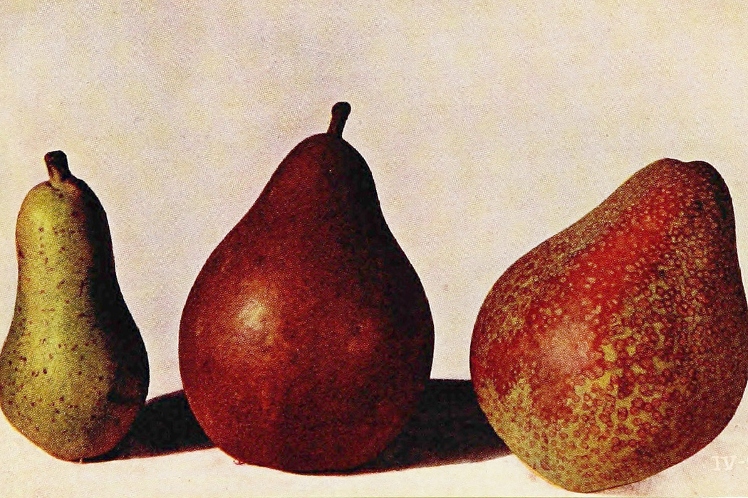 Pear seedlings from a book about Luther Burbank