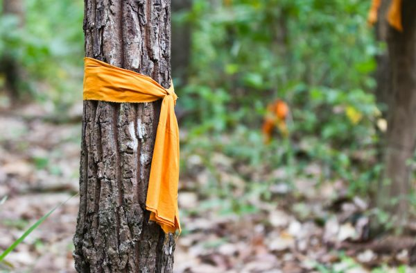Orange Buddish Monks Robe tied around a tree.