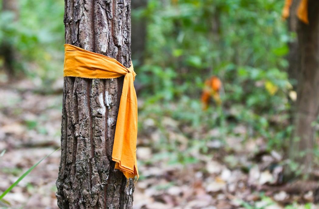 Orange Buddish Monks Robe tied around a tree.