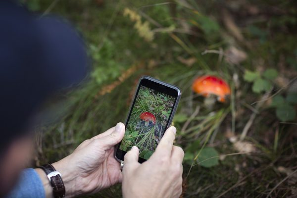 A person taking a photograph of a mushroom on their phone.
