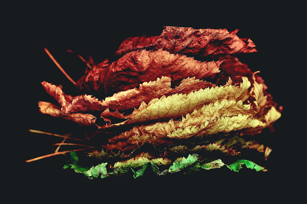 Leaves stacked against a black background