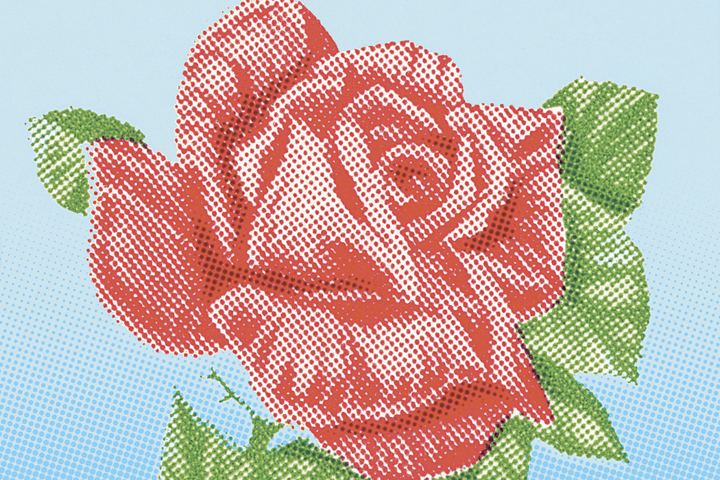 Illustration: A rose  Source: Getty