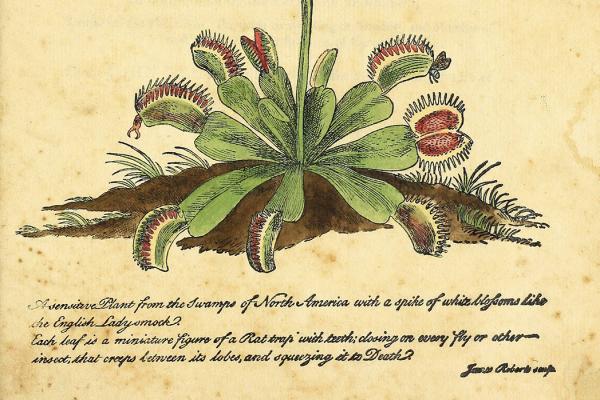 bottom half of a venus flytrap