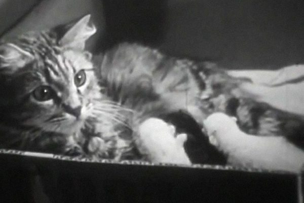 A still from The Private Life of Cats