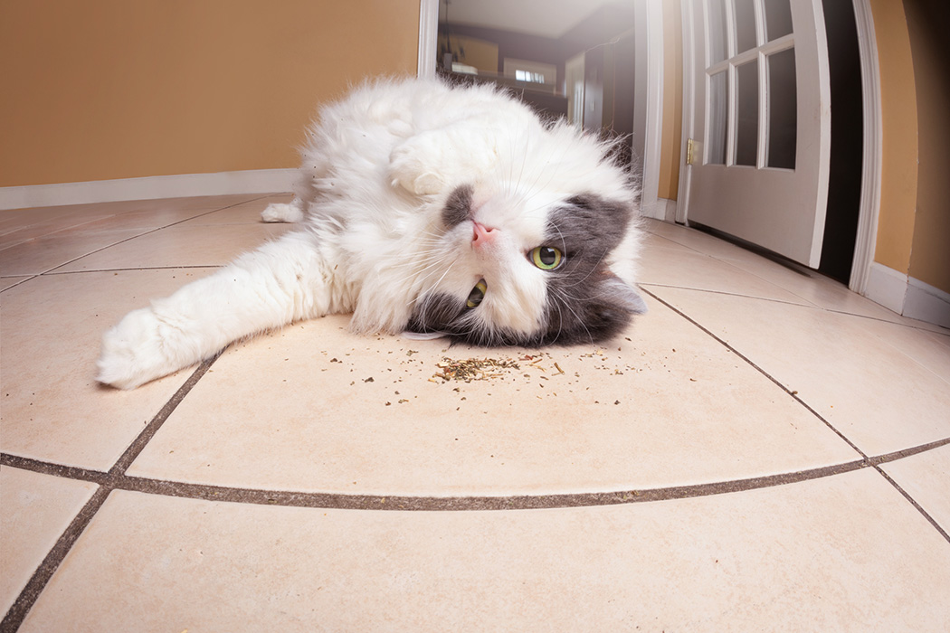 A funny fisheye image of a zoned out kitty rolling in loose catnip.