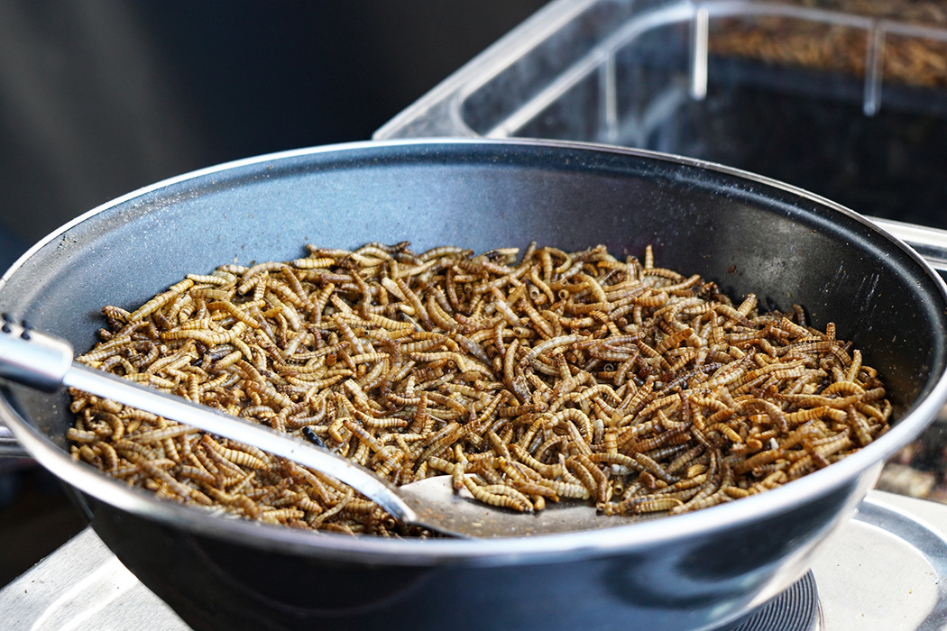 A pan full of mealworms