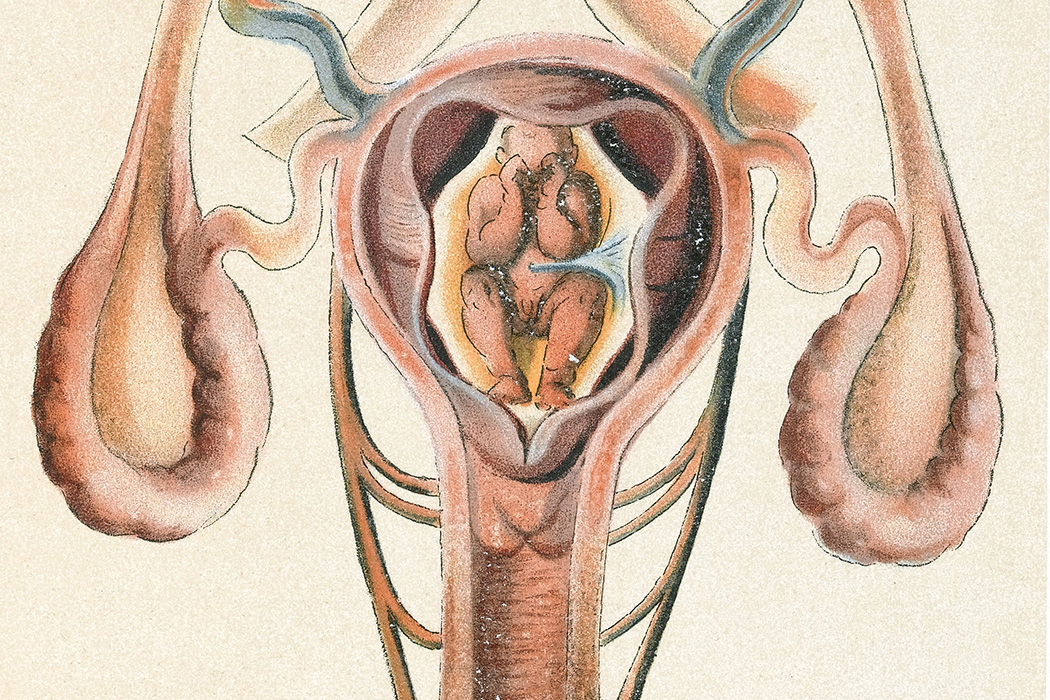 An image of the uterus and womb, 1908
