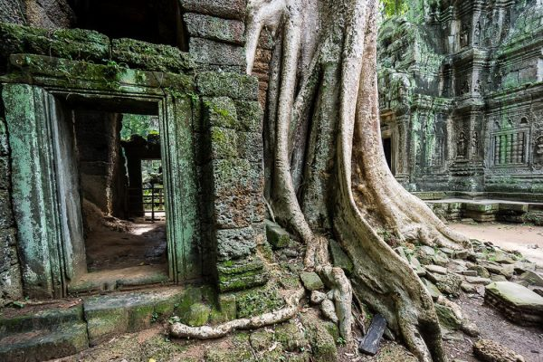 Ruins of Ta Prohm, Cambodia