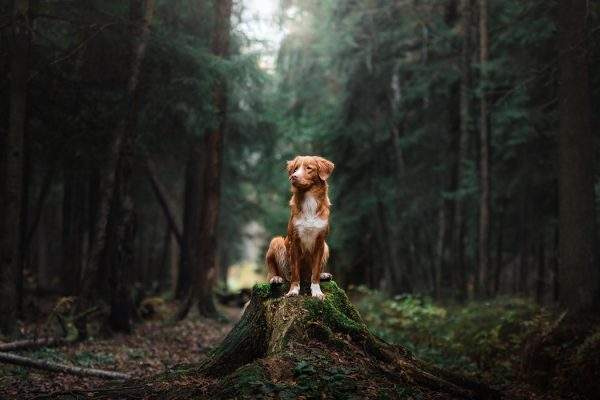 A dog sitting in the woods