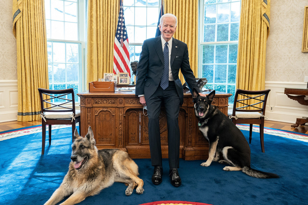 President Joe Biden poses with the Biden family dogs Champ and Major Tuesday, Feb. 9, 2021, in the Oval Office