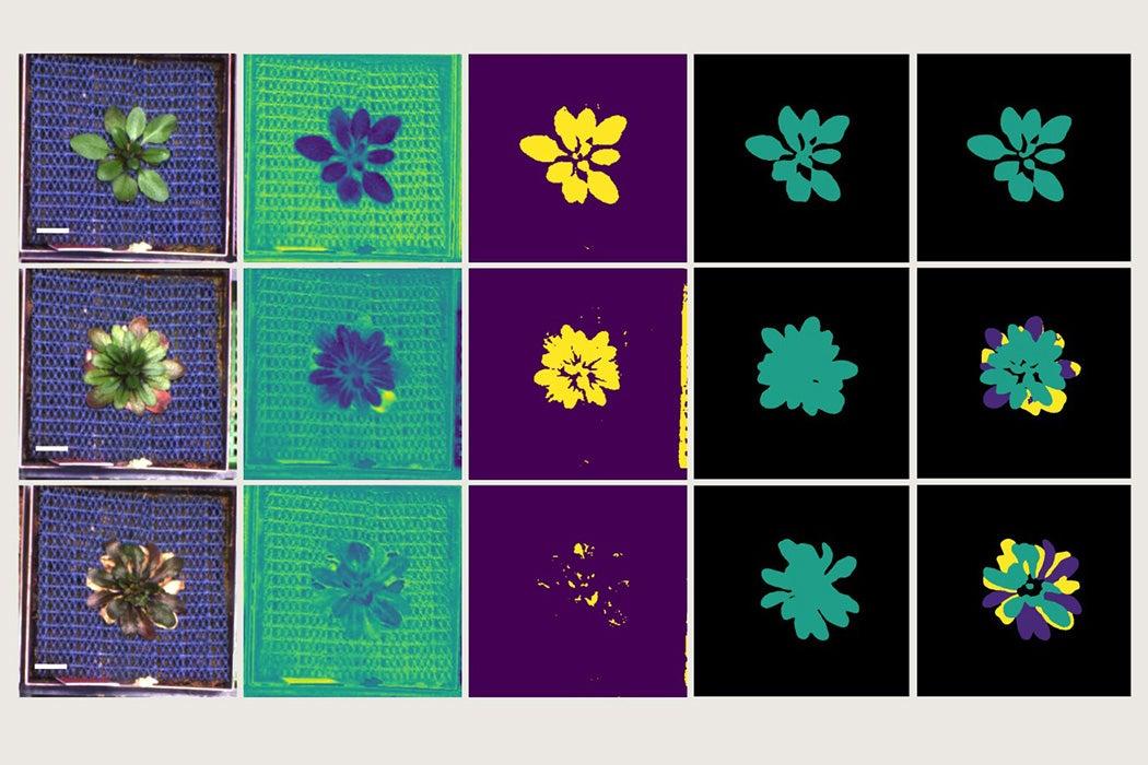 Performance of Color-Based Versus Semantic Segmentation