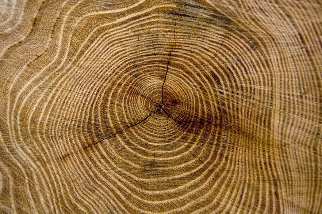 Tree Rings of a Stump