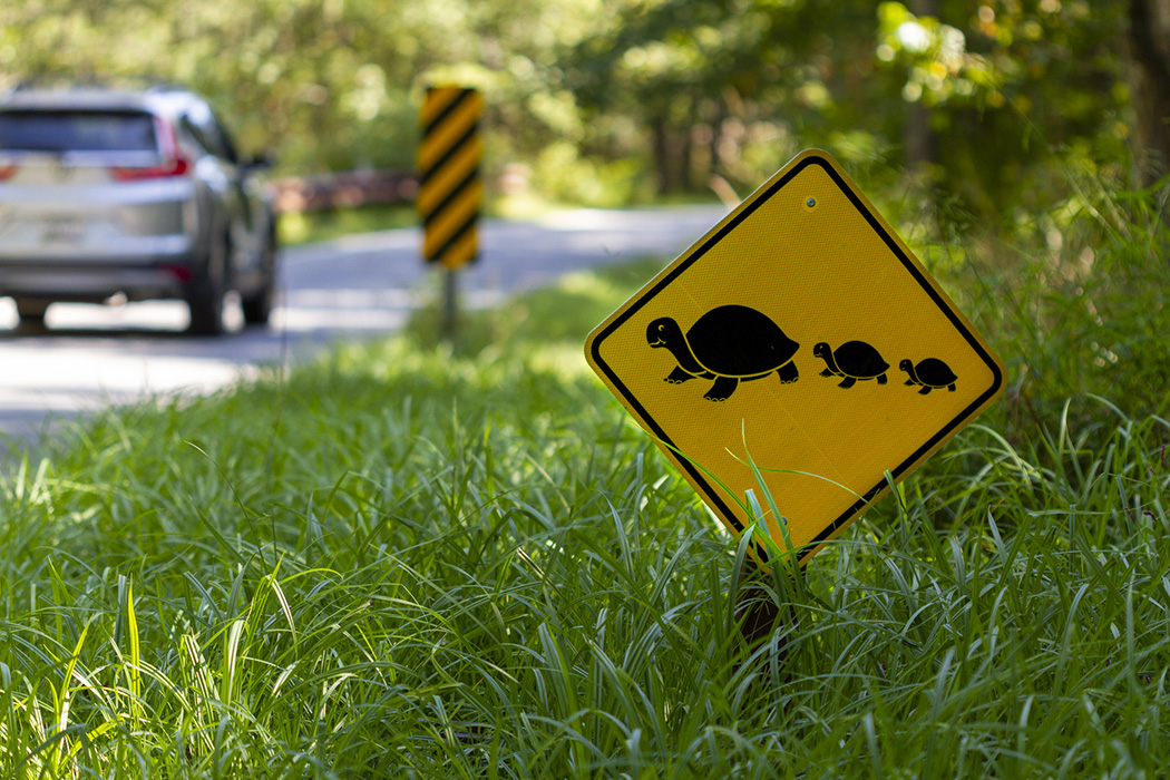 A road sign at a wildlife refuge that warns the drivers of turtles crossing the road.
