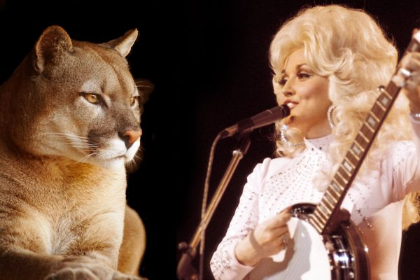 Dolly Parton and a cougar