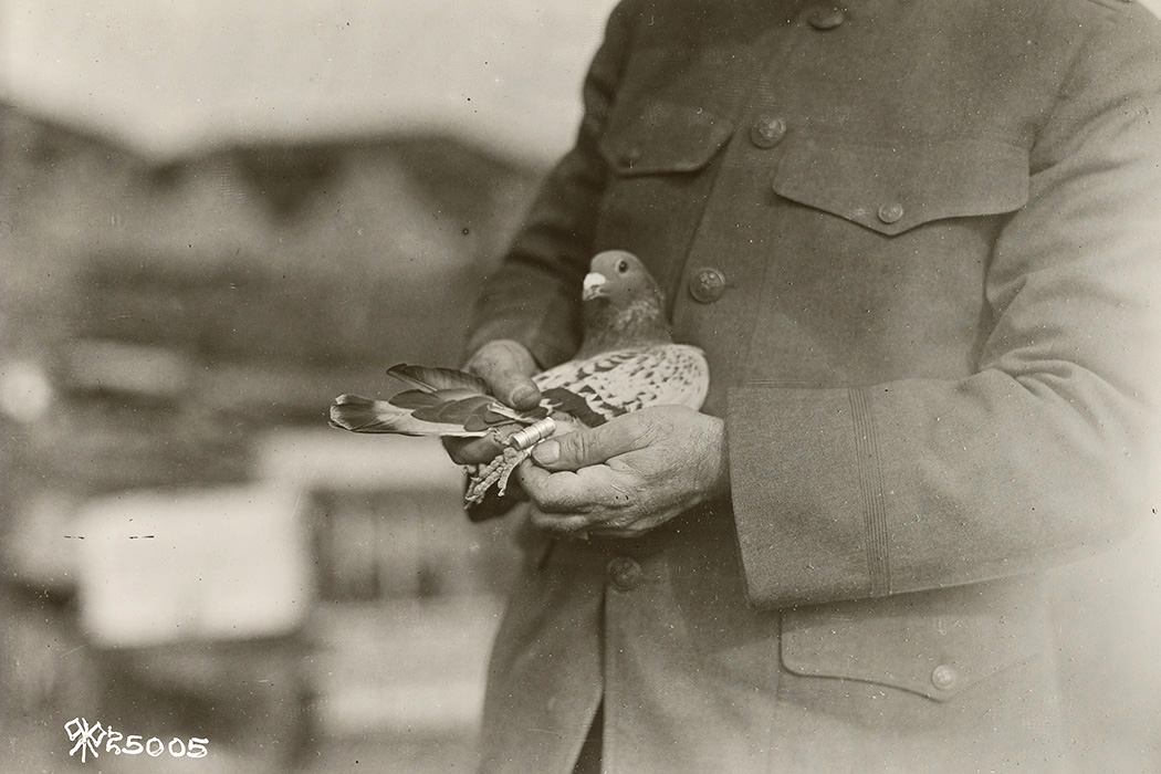 Signal corps, pigeon section, 1919