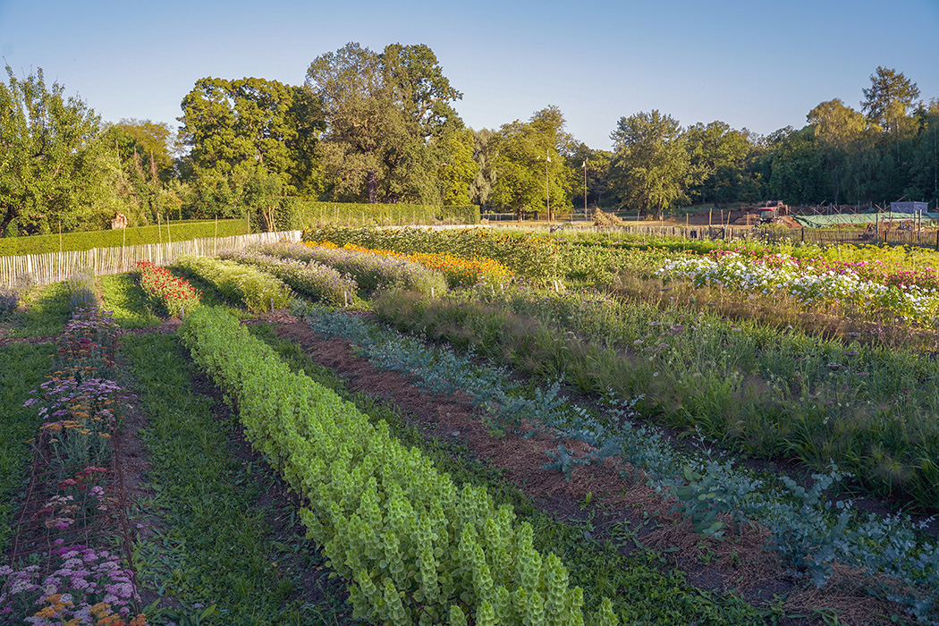 Permaculture in Stockholm