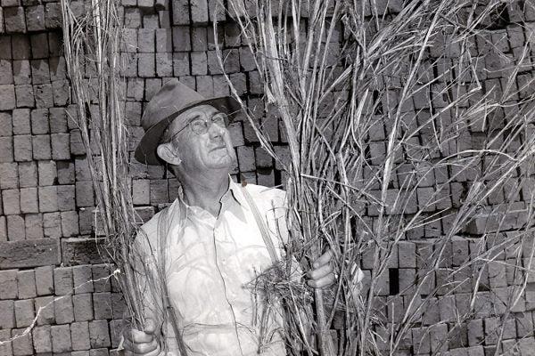 "Leading Kentucky hemp farmer Joe ""Daddy Burt"" Burton with a harvested hemp plant."