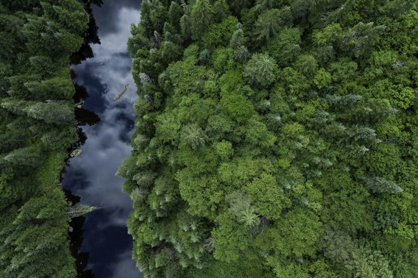 Aerial View of Boreal Nature Forest in Summer, Quebec, Canada
