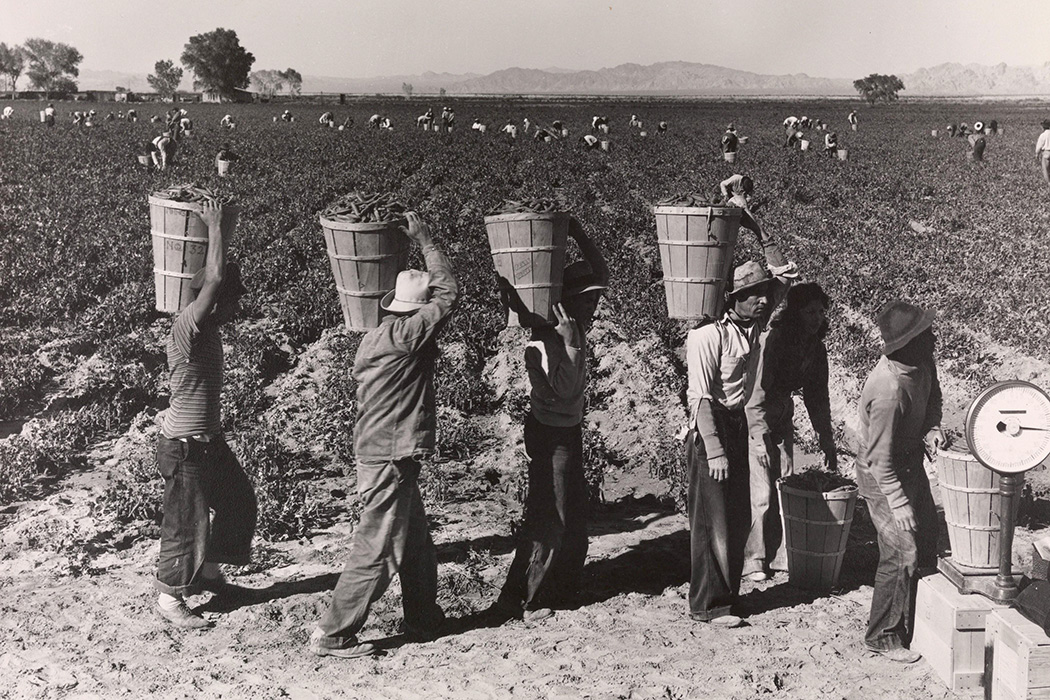 Pea Pickers Line Up on Edge of Field at Weigh Scale, near Calipatria, Imperial Valley, California by Dorothea Lange