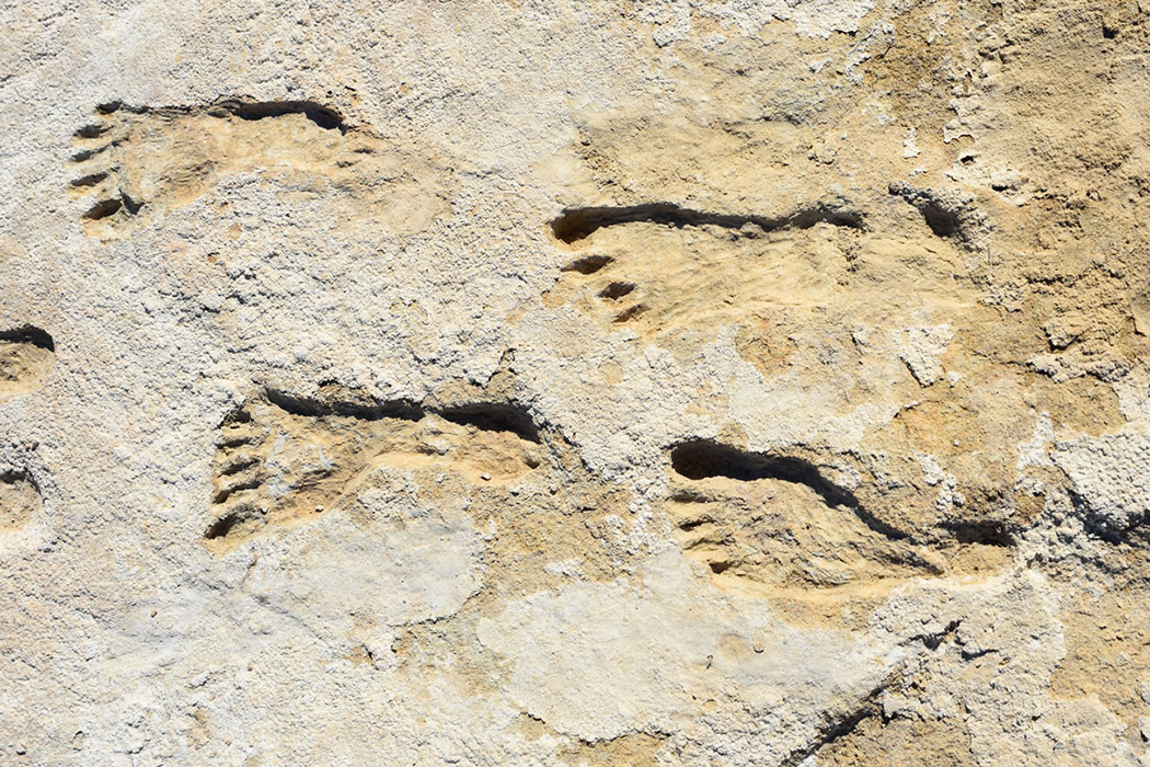 Ancient human footprints found at White Sands National Park in New Mexico