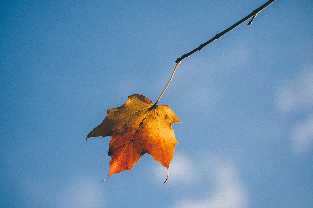 An autumn leaf on a branch
